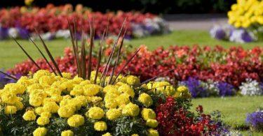 Яркую клумбу непрерывного цветения можно создать из нескольких видов цветов