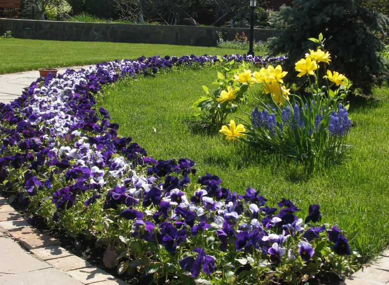 Клумба непрерывного цветения - интересное и современное решение