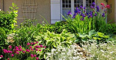 Сделать клумбу непрерывного цвета можно своими руками, используя рекомендации садовников