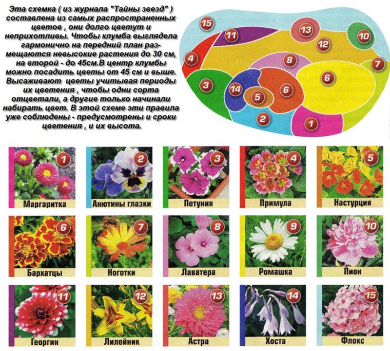 Для создания клумбы непрерывного цветения используют много видов разных цветов и кустарников