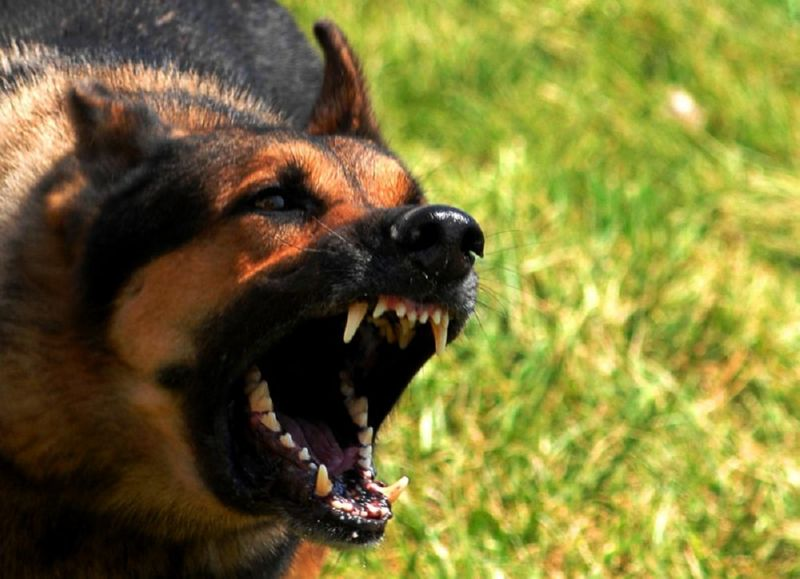 Травля кротов собаками