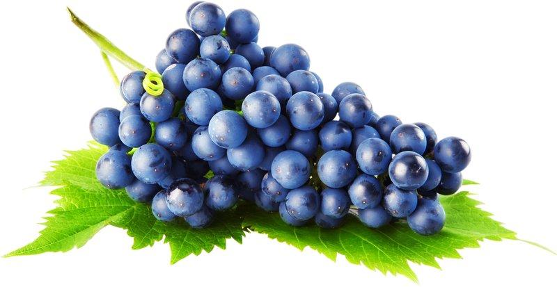 В какое время и как сажать виноград 85