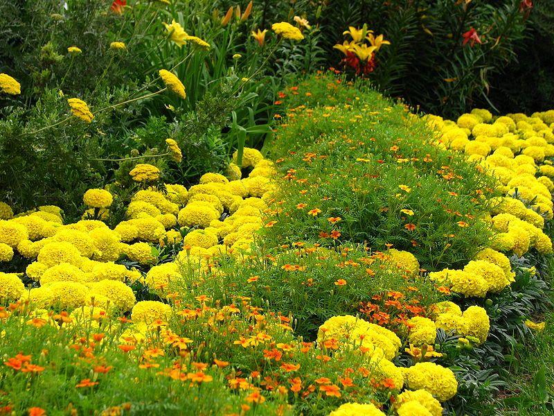 Влагоустойчивые цветы - прекрасный вариант для неплодородных почв