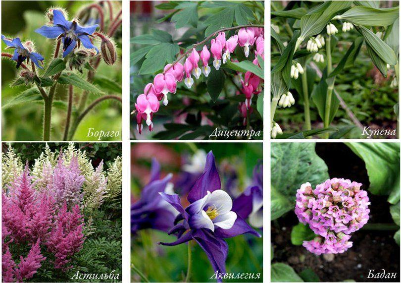 Как выбрать засухоустойчивые растения и как за ними ухаживать, примеры