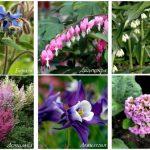 Засухоустойчивые цветы и кустарники очень неприхотливы в уходе