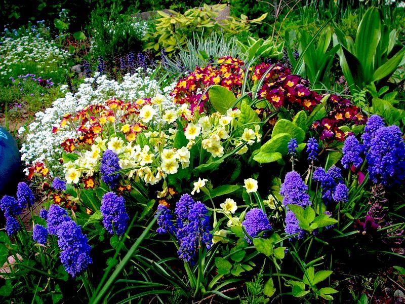 Многолетние цветы на огороде