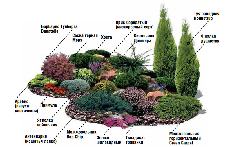 план высадки растений на альпийской горке