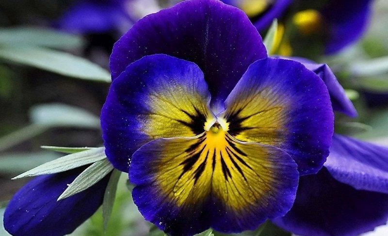 красивые цветы фото и названия