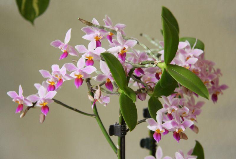 Какой грунт лучше всего для орхидеи