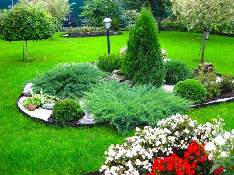 Красивые хвойные растения