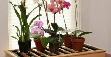 Правильные условия для орхидеи Фаленопсис