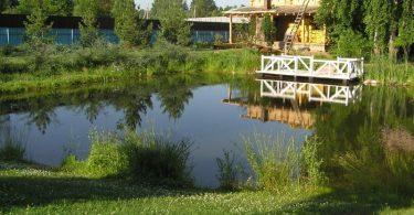 пример пруда