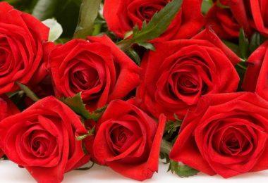 rozi-krasivie2