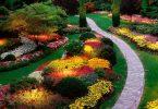Яркие красочные садовые цветы для дачи