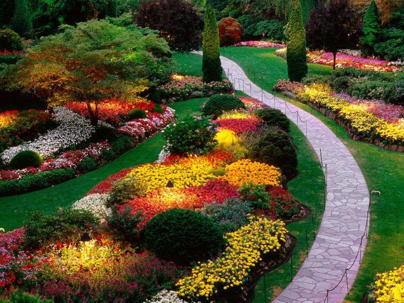 Картинки по запросу цветы в сад