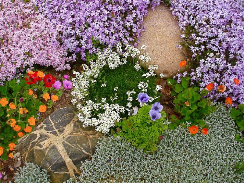 Стелющиеся растения для альпинария
