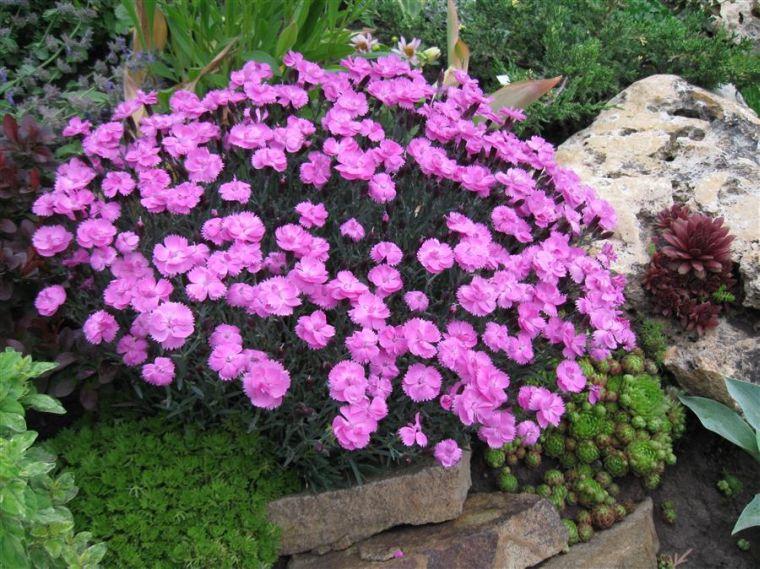 Многолетние садовые цветы, цветущие всё лето, название ...