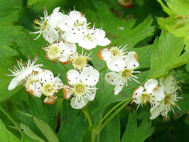 Крупные цветы растения