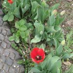садовая дорожка из старых шин