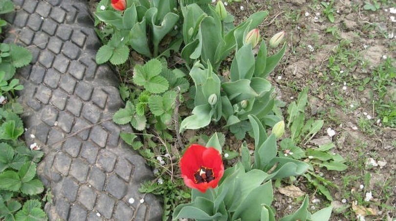 Садовая дорожка своими руками из покрышек фото 109
