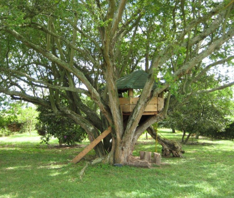 Фото домиков на дереве