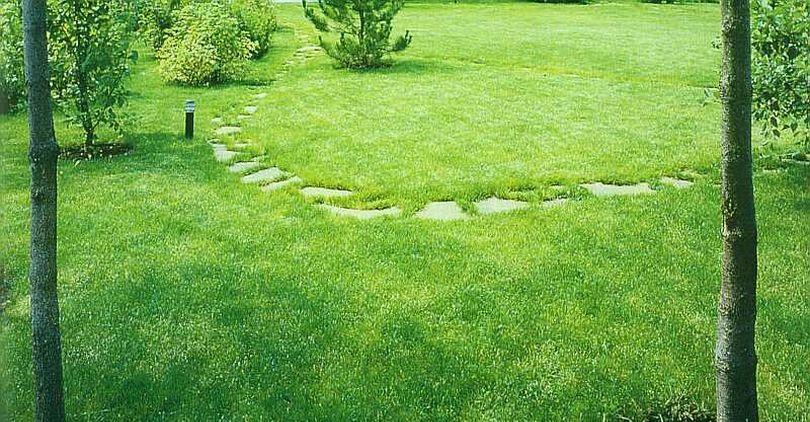 Когда сажают газонная трава лилипут 796