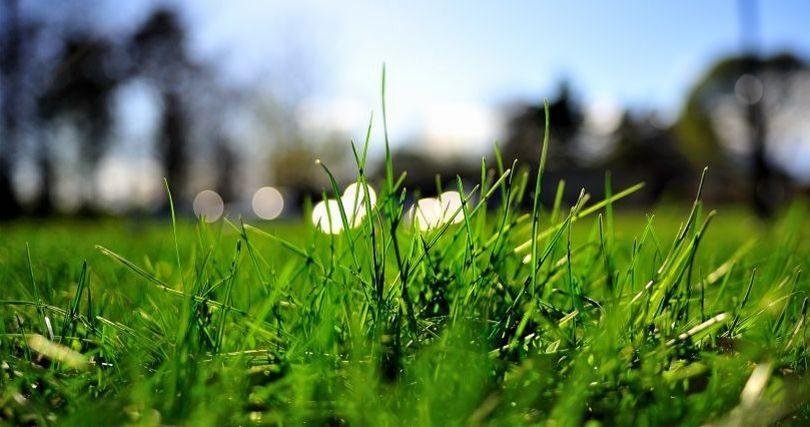 Трава на даче фото