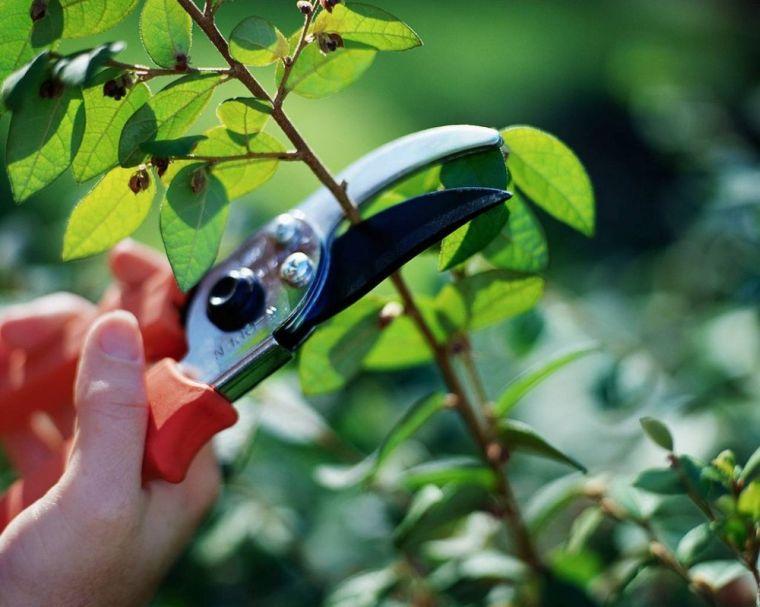 Обрезка кустарника для живой изгороди
