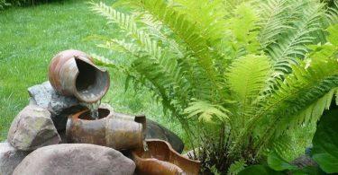 папоротник садовый