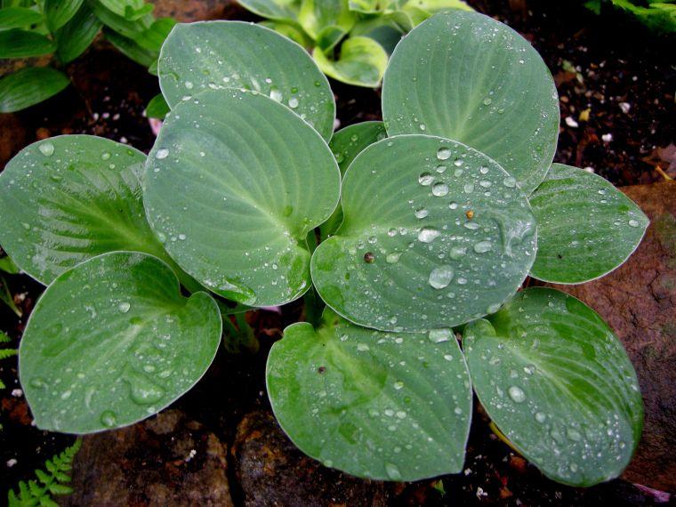 Влага на растении