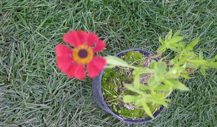 Рассада растения
