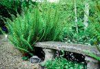 Орляк в саду
