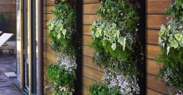 Клумбы для ампельных цветов