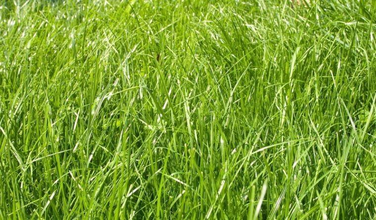 Мавританский газон своими руками: нюансы создания, фото