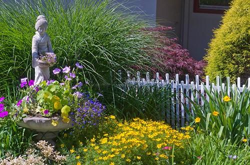 Мискантус в саду, применение