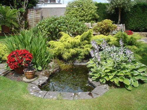 Как оформить водоем растениями