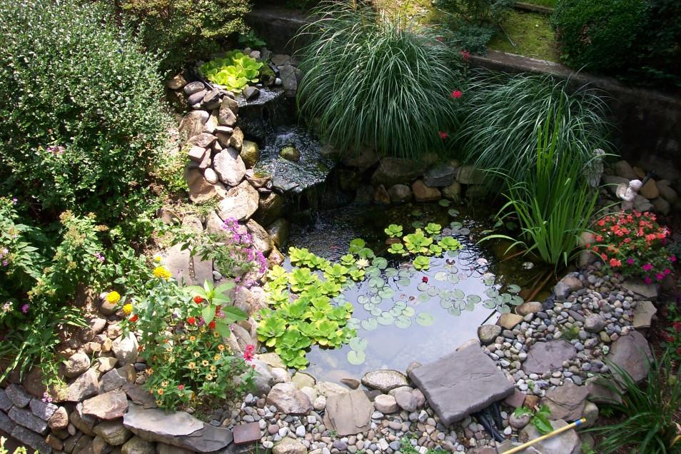 Как оформить маленький водоем