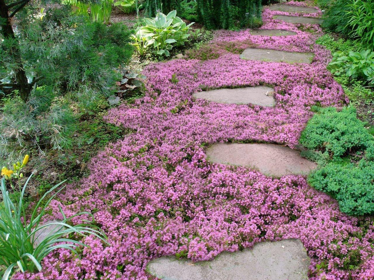 Почвопокровные цветы фото название и уход за ними
