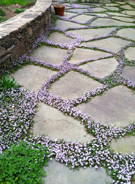 Почвопокровные цветы многолетники фото и названия