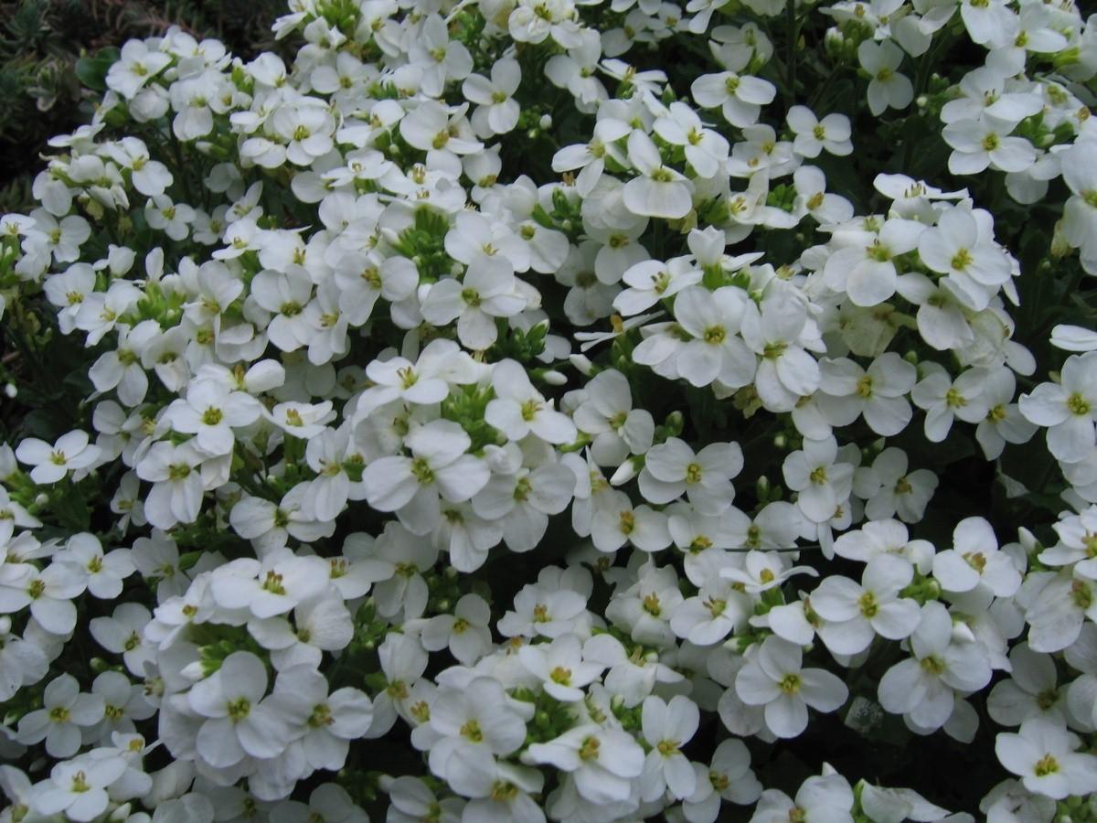 Садовые цветы: фото и названия самых красивых растений