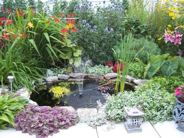 Растения вокруг водоема