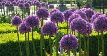 Сухоцветы на фото, названия