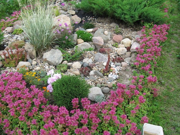 Сухоцветы в ландшафтном дизайне