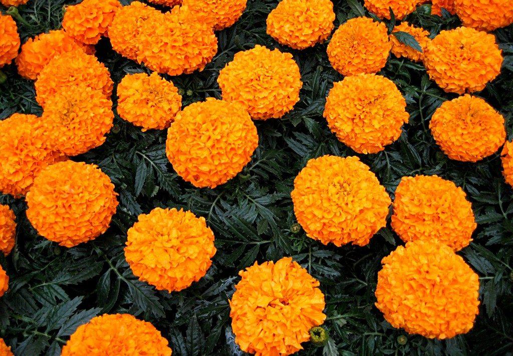 Оранжевый принц