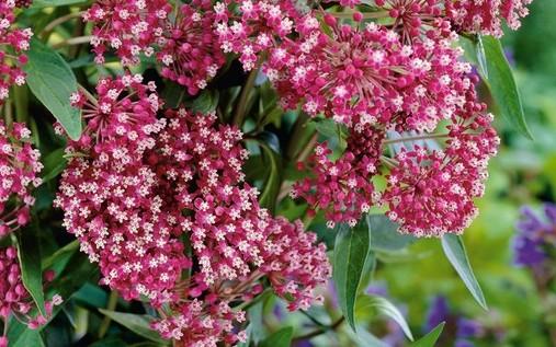 Стебель толстый и зеленый цветок