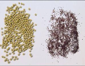 Семена бегонии в гранулах