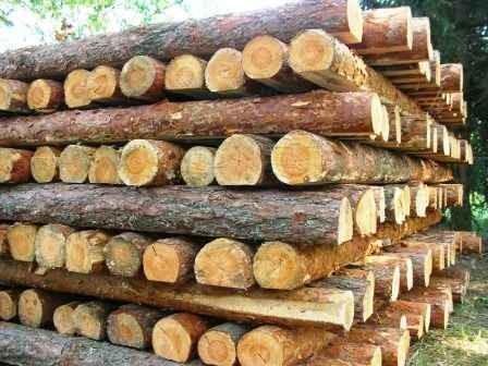 Столбы для забора из дерева