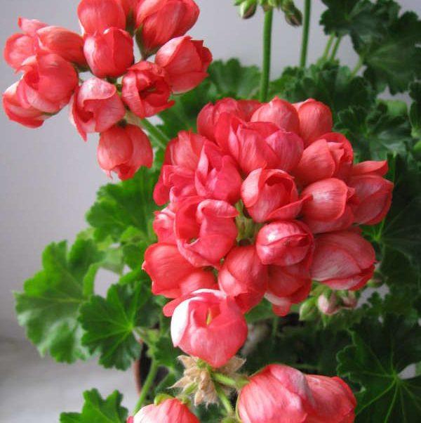 Купить полив цветов