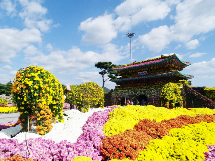 Корейская хризантема