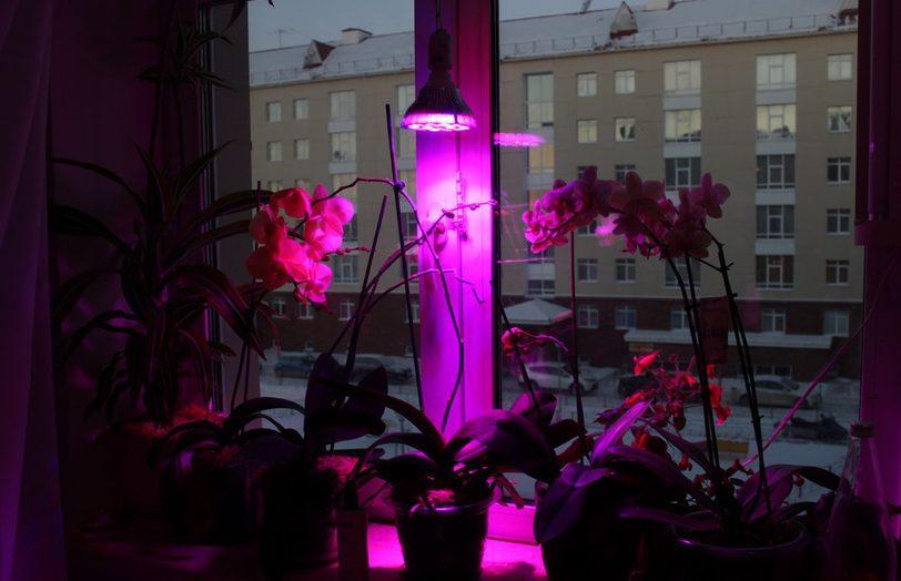 Подсветка для растений